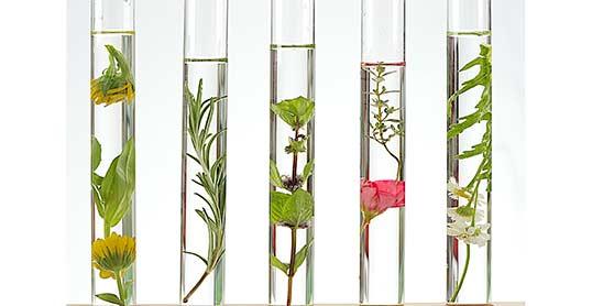glassrør med blomster i
